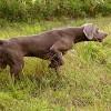cane in ferma