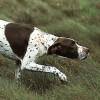 cane da ferma