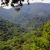 foresta sarda