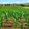 pexels campo coltivato agricoltura 800