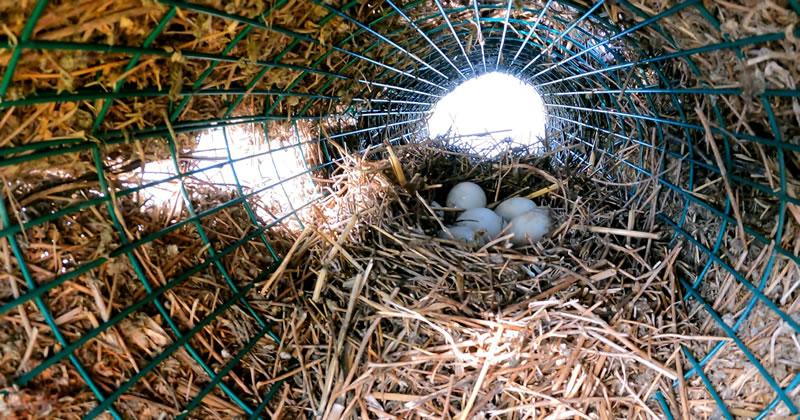nido artificiale