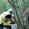 Volontari Fidc Triora al lavoro