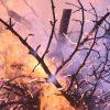 rami arsi dal fuoco